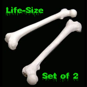 Pair of Life Size Human Skeleton Anatomy - BUDGET FEMUR LEG BONES SET - Halloween Decorations Pirate Decor Prop Building DIY