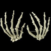 Realistic life size first quality BUCKY SKELETON HANDS PAIR BONES - Human Anatomy Cheap Halloween Prop Building Walking Dead Zombie Pirate Theme Gothic Decor - Need a hand without spending an arm and a leg? Set includes both Right Hand and Left Hand.