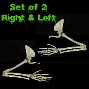 Realistic pair life size 4th quality BUCKY SKELETON ARMS w-HANDS-Human anatomy bones cheap Halloween prop building zombie pirate gothic decor. Ghoulishly gruesome, castle dungeon indoor outdoor cemetery graveyard display props! Set of Right and Left.