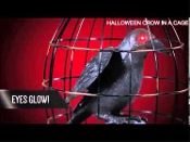 Life Size Realistic Gothic ANIMATED BLACK CROW RAVEN PROP in METAL BIRD CAGE. Motion, touch or push button activated bird. Creepy blood red LED eyes light up, as he squawks and flaps its wings! Spooky Halloween haunted house costume party decoration.