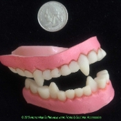SMALL PETITE Size Undead Monster Horror Teeth VAMPIRE FANGS DENTURES Dracula True Blood-inspired Ghoulish Demon-Fanged Monster Creature Halloween LARP Cosplay Role Play Dress Costume Prop Accessory Prosthetic Special Effects Makeup-KIDS TEENS ADULTS