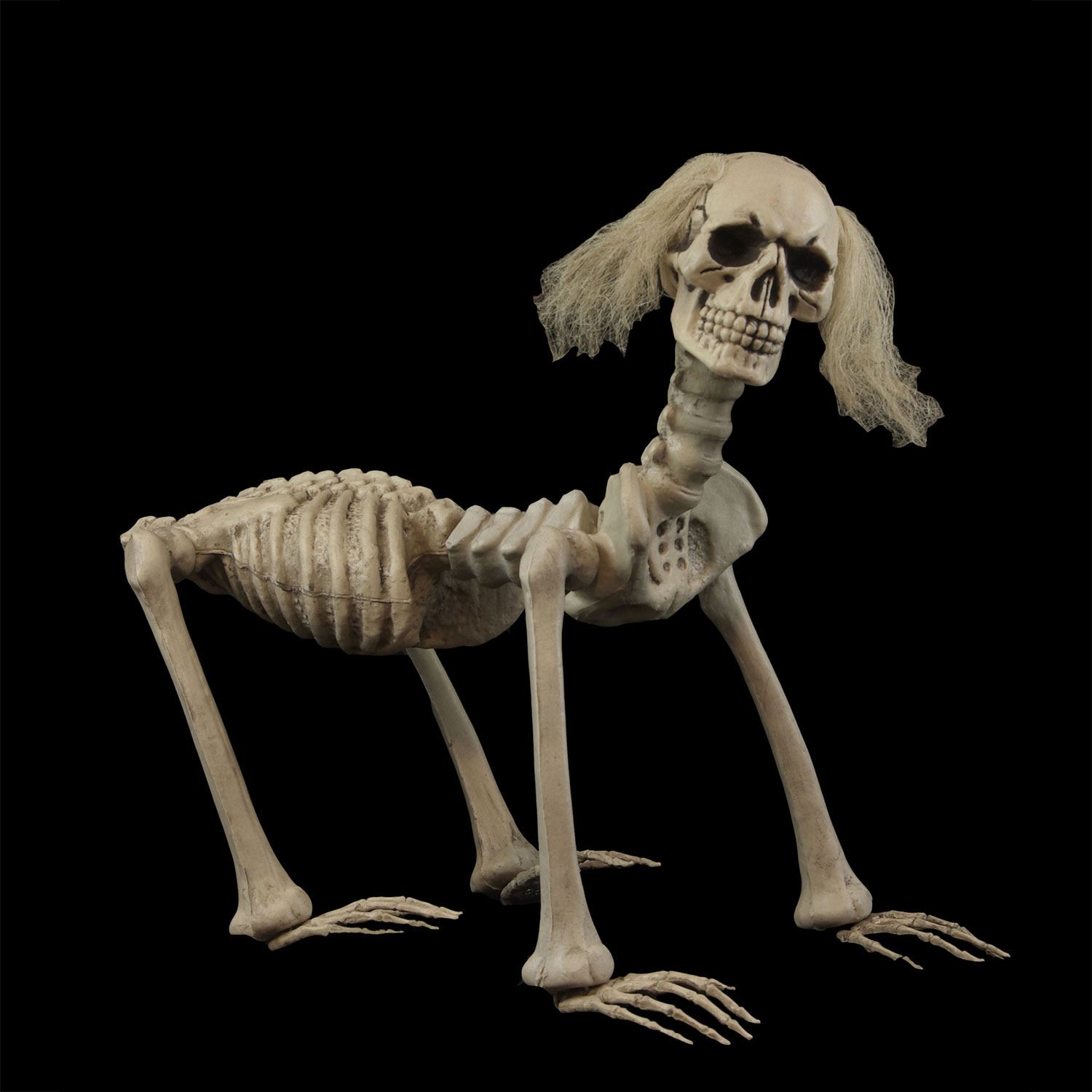 creepy canine bones shadow the mutant dead skeleton dog halloween haunted house horror prop
