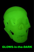 LIFE-SIZE 3-Piece BUDGET BUCKY-1st Quality GLOW-in-the-DARK HUMAN SKELETON SKULL-Needs no batteries-Charges in Bright Light! LifeSize Anatomical Articulated 3-Part Skull. Halloween prop at a great price. Upper and lower hinged jaw, hook-on calvarium.
