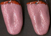 Body Parts TONGUE EARRINGS Realistic Gross Dexter Halloween Costume Jewelry