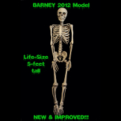Life Size Bargain Basement BARNEY HUMAN SKELETON SKULL CORPSE Gothic Decor Anatomy Bones Halloween Props. 5-ft tall. Display Hanging, Sitting, Standing. Cheap Halloween Haunted House Decorations Prop Building Supplies. Jointed Articulated Dead Body.