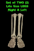 PAIR-Human Anatomy Bones-LIFE SIZE SKELETON LEGS-Zombie Prop Building Supplies-Right and Left LEG. 2-piece Set Life-Size Human Anatomy Bones. Need some skeleton parts but don't want to spend an arm and a leg? Look no further!