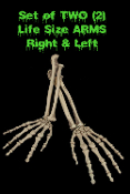 PAIR-Human Anatomy Bones-LIFE SIZE SKELETON ARMS-Zombie Prop Building Supplies-Right and Left arm. 2-piece Set Life-Size Human Anatomy Bones. Need some skeleton parts but don't want to spend an arm and a leg? Look no further!