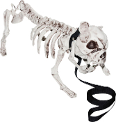 Meet the new family guard dog, BONES! Start your own Pet Cemetery! Realistic UNDEAD ZOMBIE SKELETON PIT BULL DOG Halloween Graveyard Prop. Creepy Halloween Haunted House scary canine for your Hounds of Hell Walking Dead cosplay party decorations!