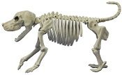 Oh, no! Snoopy's DEAD? MEDIUM Life Size Realistic Creepy SKELETON BEAGLE DOG Prop Building Decoration. Canine ZOMBIE BONEZ Hungry Skeletal Walking Dead inspired attack Dog guards your Halloween Haunted House and Horror Circus Carnival. 25-inch long