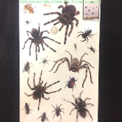 Creepy Crawlies Gothic Horror - TARANTULAS SPIDERS FLIES BEETLES BUGS INSECTS - Spooky Halloween Haunted House Prop Scary Party Decoration Bathroom Floor Kitchen Wall Mirror Window Door Refrigerator Dishwasher Appliance Sticker Cling Sticky Car Decal