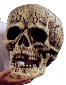 SKULL GIANT Halloween Skeleton Head Haunted House Prop Building Supplies- This skull is as big as they come. Polyurethane foam with rotting features and moveable lower jaw. 9.5-inch wide x 13.5-inch tall x 12.5-inch deep