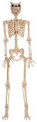 5Ft Pose-N-Stay WEREWOLF SKELETON Poseable Halloween Horror Prop