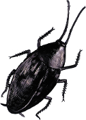 6-inch GIANT COCKROACH Funny Gag Halloween Haunted House Prop