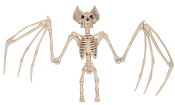 LG 3Ft SKELETON BAT Poseable Joints Movable Wings Halloween Prop