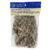 Gothic Cemetery Natural SPANISH MOSS Haunted House Halloween Decoration. Creepy decorative prop building addition for holiday centerpieces, spooky graves and displays! Add a musty, moldy touch to graveyard tombstone scenes.